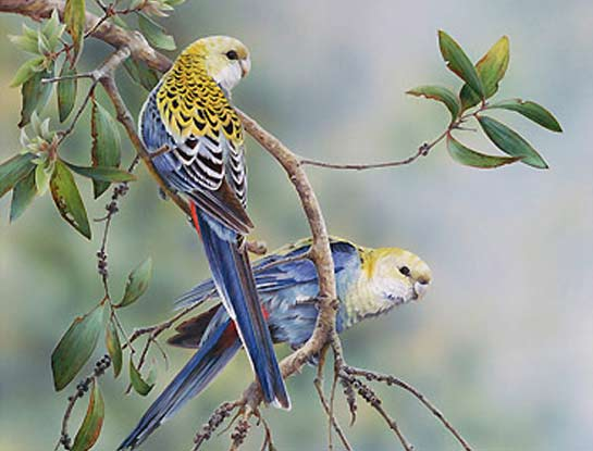 pale headed rosellas bird art by bird artist Peta Boyce