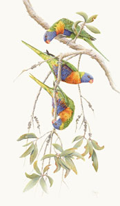 rainbow lorikeets bird art by artist Peta Boyce