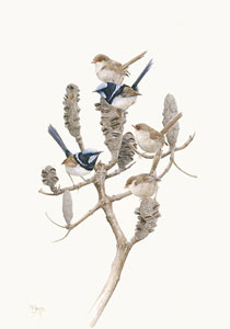 superb wrens bird art by artist Peta Boyce