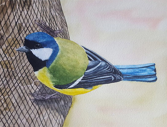 great tit by bird Artist Craig Daniel