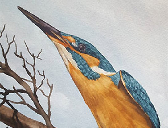 kingfisher by bird Artist Craig Daniel