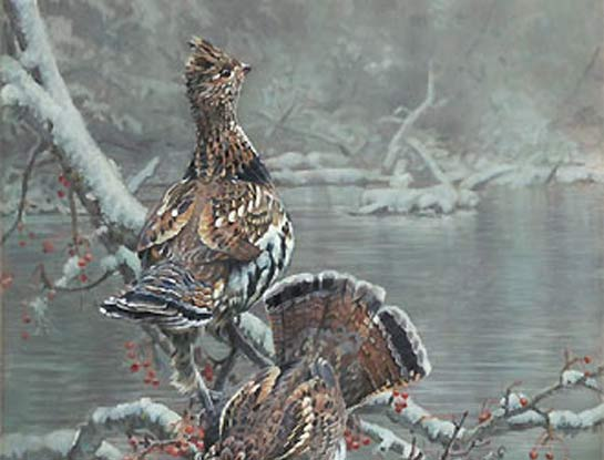 ruffed grouse by bird Artist Kim Diment