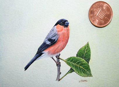 bullfinch art by artist Lynn Gould