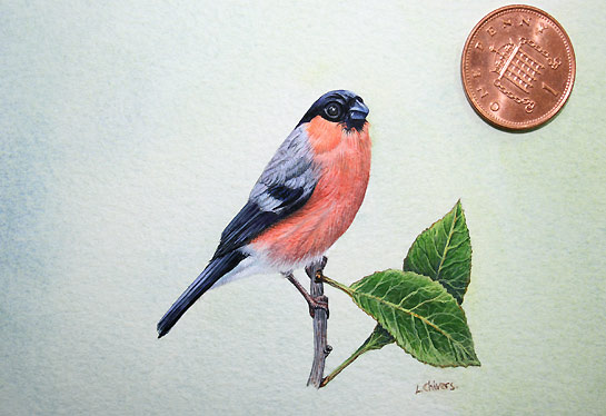 Bullfinch Bird Painting by artist Lynn Gould