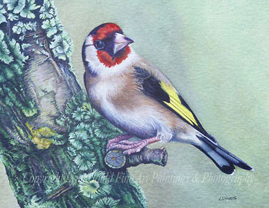 goldfinch art by artist Lynn Gould