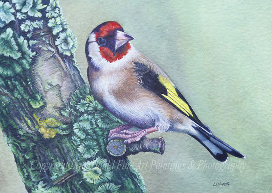 Goldfinch on the Lichen Covered Cherry Tree Bird Painting by artist Lynn Gould
