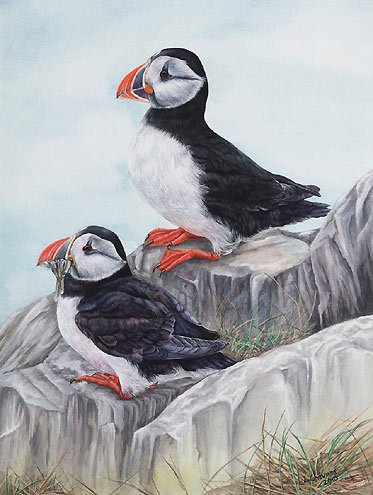 Puffins Bird Painting by artist Lynn Gould