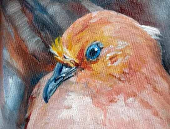 blue eyed ground dove bird art by bird artist Kitty Harvill