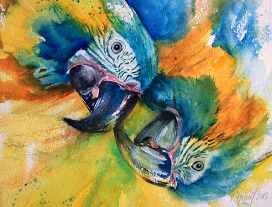blue throated macaws bird art by bird artist Kitty Harvill