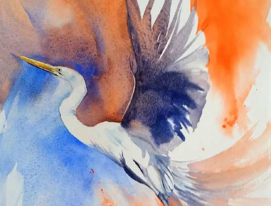 great egret bird art by bird artist Kitty Harvill
