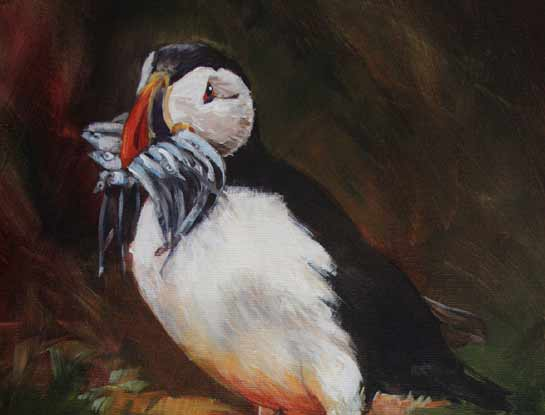 puffin bird art by bird artist Kitty Harvill