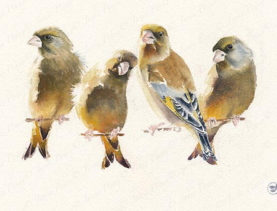 greenfinches bird art by bird artist Janie Penny