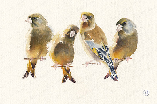 Four Greenfinches Bird Painting by artist Janie Penny